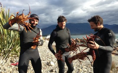 Extreme Foraging in New Zealand